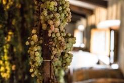 Dessert grapes
